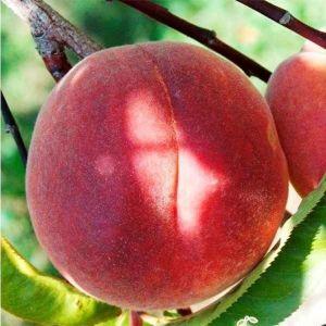 Персик Хардблейзе (нектарин)
