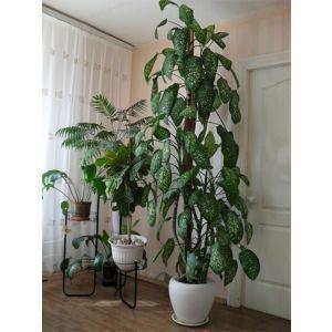 Удобрение для декоративно-лиственных растений 500мл