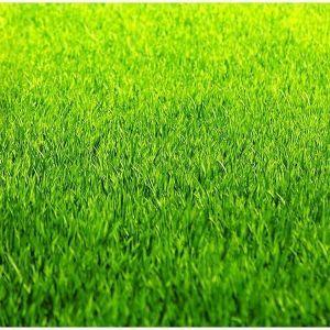 Газонная трава Mini  7,5 кг