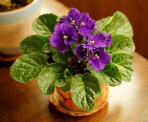 Удобрение для цветущих растений, 300 гр