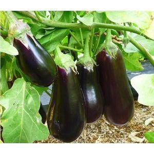 Фитоцид-р от болезней для овощей и фруктов