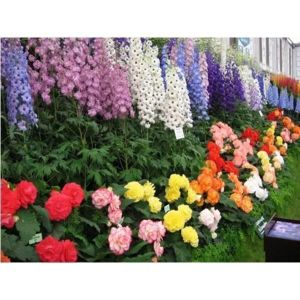Сапрогум для декоративных растений 500 мл