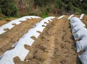 Рулон белого агроволокна плотность 17 г/м.кв, размер 1,6мх100м