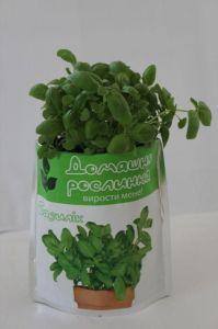 Домашнее растение - Базилик