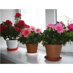 Удобрение Biopon для цветущих растений в палочках