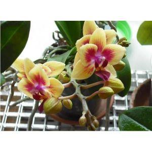 Удобрение Biopon для орхидей в палочках