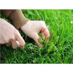 Удобрение Biopon от сорняков на газоне в гранулах