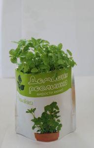 Домашнее растение - Мелисса