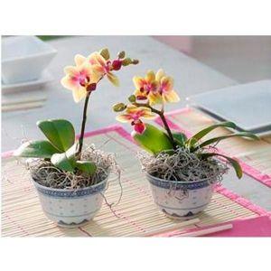 Биопрепарат для орхидей
