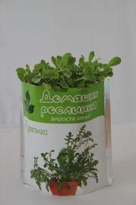 Домашнее растение - Руккола