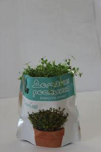Домашнее растение - Тимьян