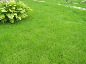 Удобрение Vila Быстрый Рост для газона 3 кг