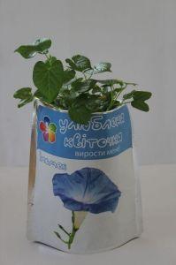 Улюблена квіточка - Ипомея