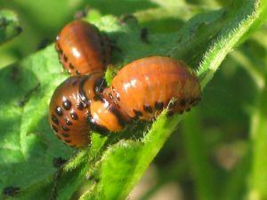 Биопрепарат Джерело от насекомых
