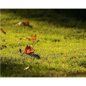 Удобрение Biopon осеннее для газонов