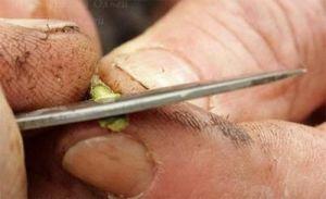 Нож  копулировочный садовый OKULIZAK складной