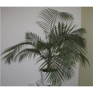Грунт Пальма