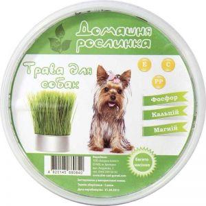 Трава для собак