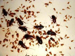 Средство инсектицидное Нео Дихлофос