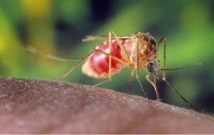 Пластинки от комаров Фруктовая фантазия Чистий Дім 10 шт