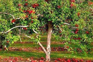 Осеннее удобрение Vila универсальное 12 кг