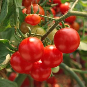 Удобрение Vila для помидоров и перцев