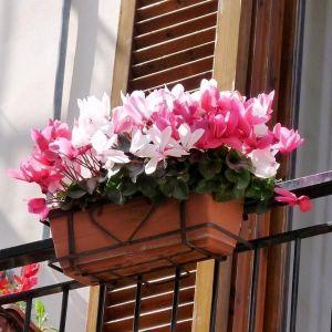 Удобрение Vila для садовых и балконных цветов