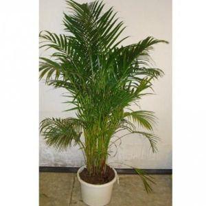 Удобрение Активин для пальм