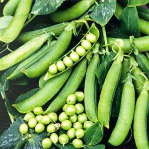 Горох овощной Сомервуд