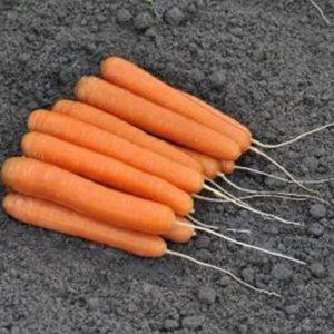 Морковь Элеганс F1