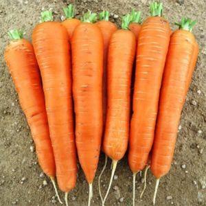 Морковь Колтан F1