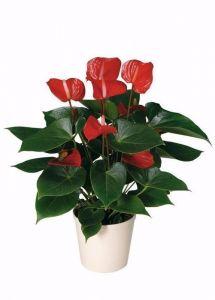 Грунт Экофлора для цветущих растений
