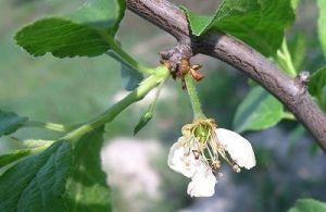 Плантафол (Plantafol) 0-25-50 завязь 25 г