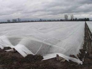 Рулон белого агроволокна 30 г/м.кв, размер 3,2х100м