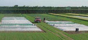 Рулон белого агроволокна 23 г/м.кв, размер 1,6мх200м