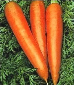 Морковь Вита Лонга, поздняя