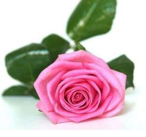 Роза Aqua (Аква)