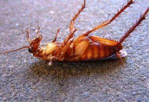 Тарацид, ловушка от тараканов и муравьев, 6 дисков