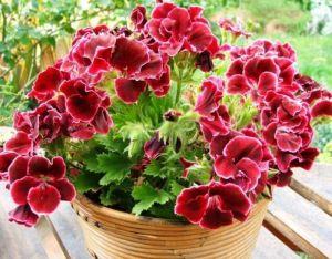 Вермикулит для растений цена фото