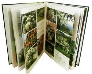Книга Экзотические деревья, кустарники и лианы в ландшафтах Украины