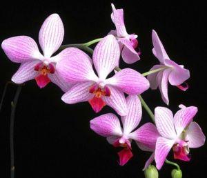 Горшок для орхидей, стекло, Ø14см