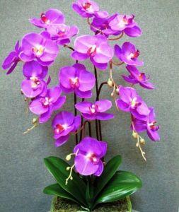 Горшок для орхидей, стекло, Ø12,5см