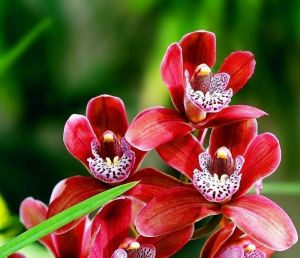 Орхидейница Пента, Ø 18см,v 1,8 л