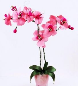 Орхидейница Пента, Ø18см