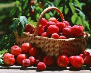 Удобрение универсальное для сада и огорода