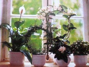 Удобрение универсальное для комнатных растений
