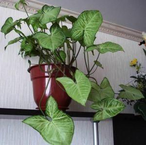 Удобрение Чистый Лист для декоративно-лиственных растений 100г
