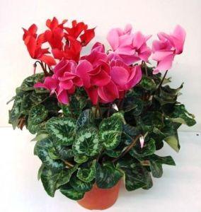 Удобрение для цветущих растений 100 гр