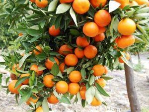 Удобрение Успех для плодово-декоративных растений