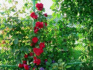 Садовая решетка, рулон 0,9х15 м